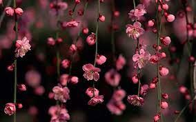 64+] Wallpaper Flowers Desktop on ...