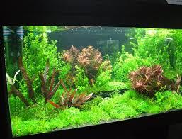 Aquarium einrichten | Aquarium Knowhow