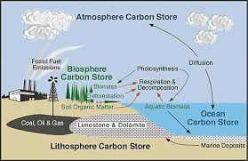 Find Out How The Carbon Cycle Works In This Guide From The