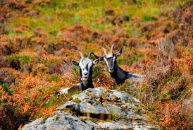 connemara national park places to