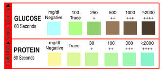 Color Chart Urine Test Strips Glucose Protein Urine Test Strips