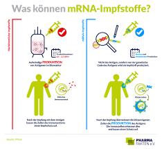 mRNA-Impfstoffe: Der Biologie auf die Sprünge helfen