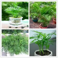 <b>100 Pieces/Lot</b> Lowest Price!DIY Home Garden Plant Santalum ...