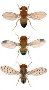 Small Flies In Kitchen Scientists Find Portal To How Animals Evolve Images