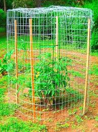 how to keep squirrels out of garden. What Will Keep Squirrels Out Of Garden Another Approach To Anti Squirrel Efforts In The How