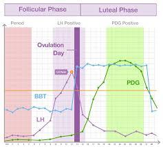 Pin On Ovulation Cycle Ovulation Testing