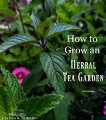 how to grow an herbal tea garden at home favorite herbal tea blend recipes