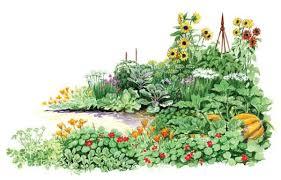 self seeding crops