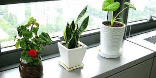 small plants for office. Small Desks Plants Medium Size Of For Office Desk Your Array Best