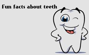 Image result for images of fun teeth facts