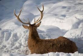 Image result for animals in winter photos