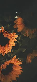 Iphone Wallpaper Sunflower Background