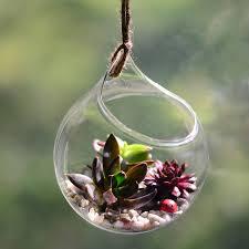 hanging glass orb succulent terrarium kit