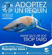 shark fr reden sonnicker shark fr adopt a shark francis le guen  adopt a shark francis le guen content creator web designer poster adopt a shark affiche2
