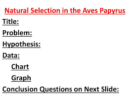 Ppt Natural Selection In The Aves Papyrus Powerpoint