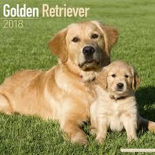 golden retriever. Delighful Retriever 3 Throughout Golden Retriever
