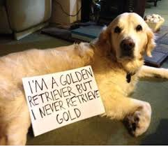 FunniestMemes.com - Funny Memes - [I'm A Golden Retriever But I ... via Relatably.com
