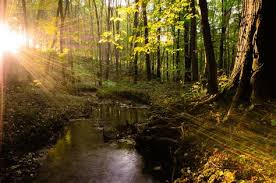 Картинки по запросу beautiful trees in forest