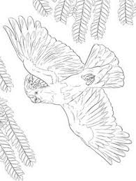 Small Picture Blue And Yellow Macaw Coloring page coloring pages Pinterest