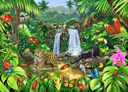 image for rainforest harmony