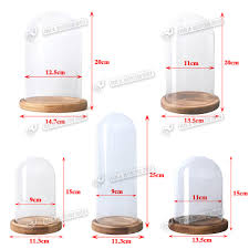 clear glass display dome cloche bell jar with wooden base diy decoration various