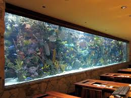 Decorations:Impressive Built In Long Wall Mirage Aquarium Ideas With  Exposed Stone Wall Also Wooden