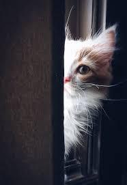 Lustige Katzenbilder Mit Sprüchen Blog Beispiel