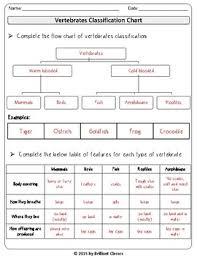 Animal Classification Chart Invertebrates Animal Classification Vertebrates Invertebrates Flow