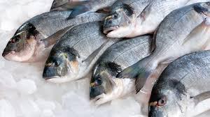 Αποτέλεσμα εικόνας για ψαρια ιχθυοκαλλιεργειες