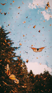 Butterfly Aesthetics Wallpapers ...