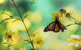 High Resolution Yellow Butterfly Wallpaper