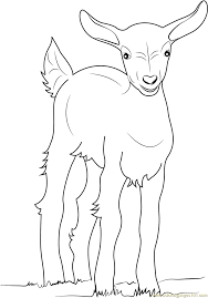 Small Picture Baby Goat Coloring Page Free Goat Coloring Pages