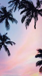 ✻ palm trees | wallpaper ✻