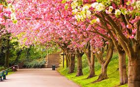 spring nature backgrounds. Spring Wallpapers - Full HD Wallpaper Search Nature Backgrounds 2
