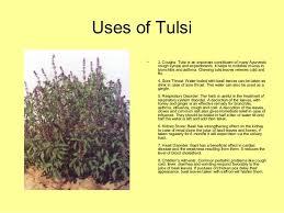 essay on medicinal plants essay on medicinal plants gxart photo essay on medicinal plant tulsi leaf essay for you essay on medicinal plant tulsi leaf image