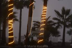 Palm Tree Night Light Foggy Night Photograph Of Illuminated Strings Of Lights