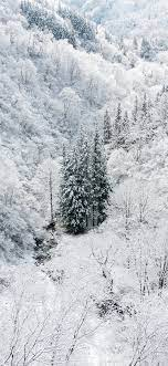 ni66-winter-white-snow-wood-forest-mountain