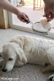 diy dry dog shampoo only 3 ings and keeps your dog smelling wonderful between baths