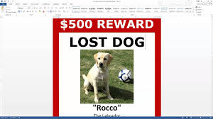Missing Pet Template Lost Dog Poster Template FREE Download MS Word YouTube 5