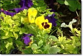 Short essay on pleasure of gardening