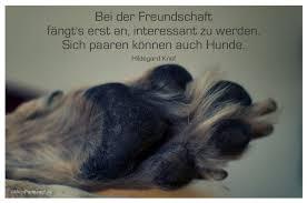 Weisheiten Und Zitate über Hunde Geburtstagswünsche Zitate Weisheiten