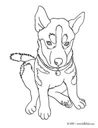 Small Picture Siberian Husky Puppy Coloring Pages Coloring Pages