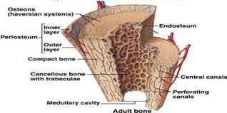 bone tissue about bone tissue assignment point