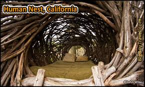 I Would Love To Stay At This Tree House Hotel  Tree House Point Treehouse Vacation California