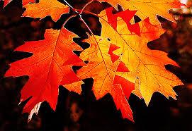 Výsledek obrázku pro obrázky podzimu