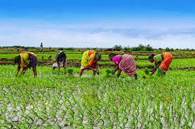 images of women farmers के लिए चित्र परिणाम