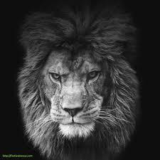 lion wallpaper google sés