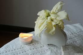 Weihnachtsstern Als Schnittblume In Weiß In Edler Vase