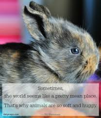 Love Animals Quotes Interesting Book Quotes About Animals