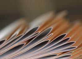 Оформление авторефератов и диссертаций в Москве печать  Печать авторефератов и диссертаций